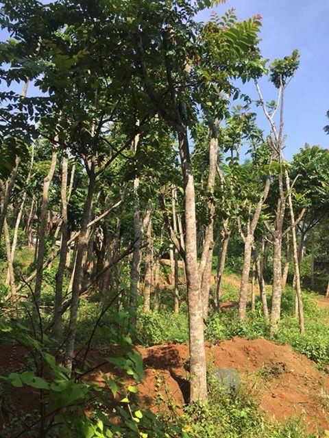 dịch vụ trồng cây xanh ở quảng ninh