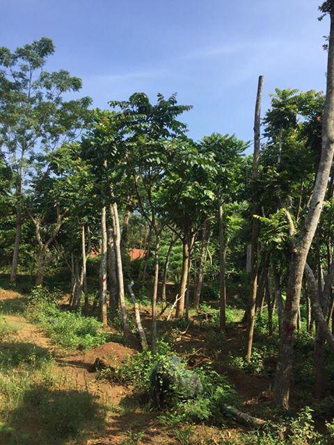 dịch vụ trồng cây xanh quảng ninh