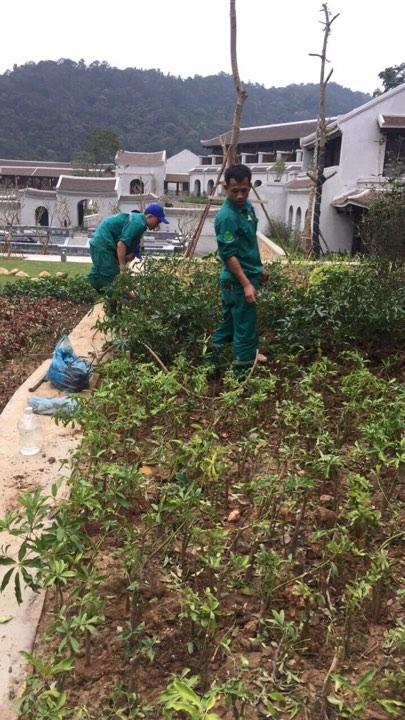 dịch vụ trồng cây xanh tại quảng ninh